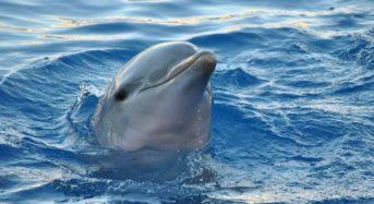 Делфините имали мафиотски организирана социална структура