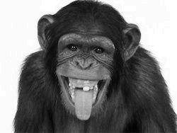 Шимпанзета похитиха и изпохапаха екскурзовод в ЮАР