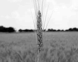 Светът е  на ръба на продоволствена криза