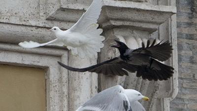 Гълъбите на мира на папата бяха атакувани веднага от чайка и черна врана (видео)