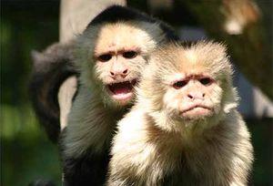 Пари, маймуни и платена любов – интересен експеримент