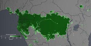 Втората по големина тропическа гора на Земята загива от сушата (видео)