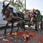 Пазарната подкрепа на ЕС – да минеш с трактор върху чушките!