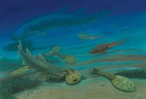 Учените: сексът се е появил преди 385 милиона години