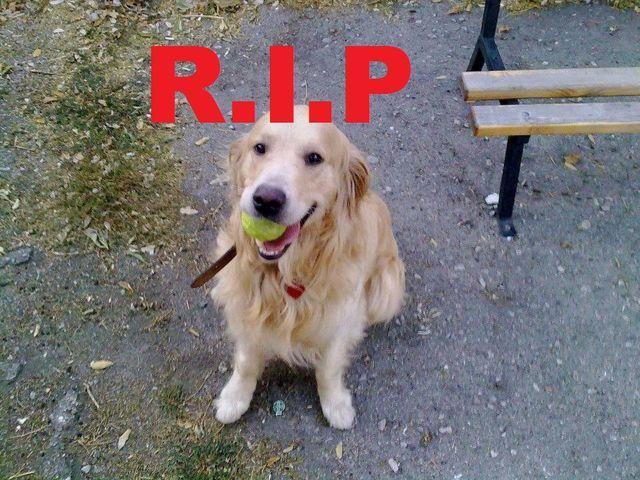 Скандално : Бивш военен застреля домашно куче във Варна!