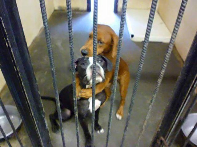 Как куче от приют спаси другарчето си по нещастие от смърт