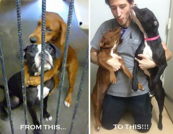shelter-dogs-hug-photo-viral