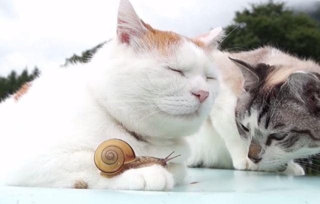 Фантастично! Приятелството между  две котки и охлюв е  хит в  YouTube