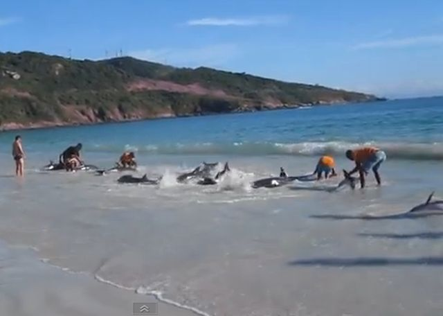 Щокиращо видео: Делфини излизат на брега сякаш по команда