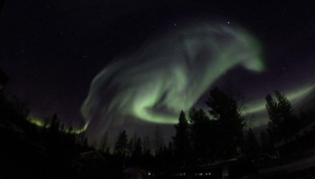 Вълк се появи в северно  сияние над Швеция