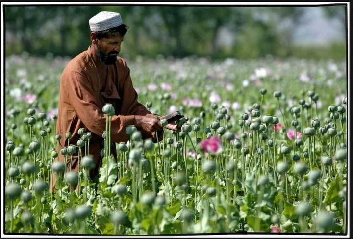 Българските данъкоплатци дават 500 хиляди долара за афганистанската армия