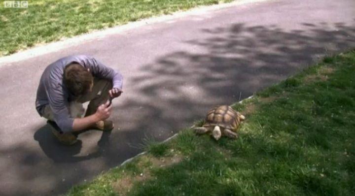 Стотици кандидатстваха за  позицията бавачка на костенурка
