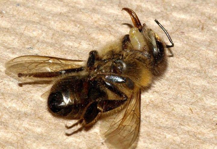 Кошмар: 50% от пчелите в България са умрели през зимата