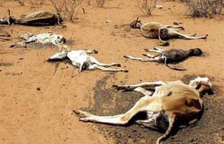 На 100  сомалийци са загинали само за два дни от сушата