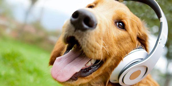 Доказано: Кучетата могат да четат мислите на стопаните си