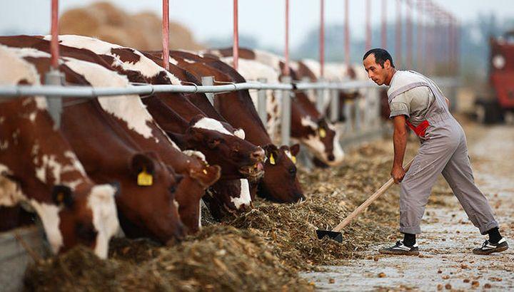 Bloomberg: Данон ще транспортира в  Сибир 5 хиляди крави