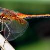 Земята: Броят на насекомите рязко е намалял