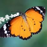Апокалиптично: Почти всички насекоми в Германия   са изчезнали
