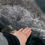 500-годишна акула живее във водите на Атлантическия океан!