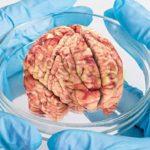 Кошмар: Учените са готови да отгледат човешки мозък в епруветка, който притежава съзнание и ...интелект!