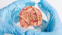 Кошмар: Учените са готови да отгледат човешки мозък в епруветка, който притежава съзнание и …интелект!