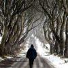 Деволюцията: В САЩ мистериозно започнаха да измират буковите гори