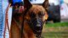 Правосъдното министерство на Украйна започна да продава и кучетата на длъжниците